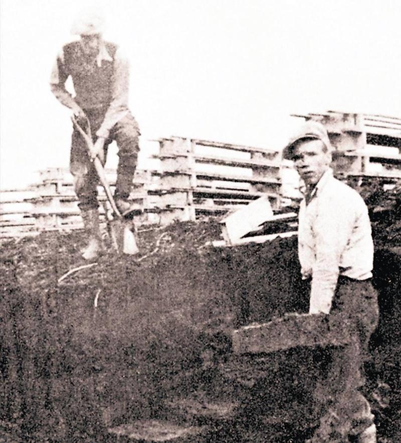 Au cours dela décennie 1940, ces deux travailleurs prélèvent la tourbe à la pelle. Rapport géologique 31. La tourbe dans Québec. Bibliothèque du Séminaire de Saint-Hyacinthe.