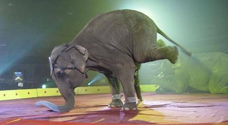 Le Cirque Mondo, un cirque traditionnel que toute la famille appréciera.