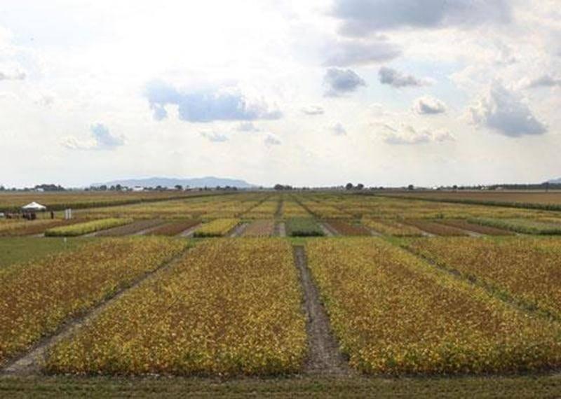 La Ferme de recherche en productions végétales appartenant à La Coop fédérée s'étend sur une superficie de 110 hectares à Saint-Hyacinthe.