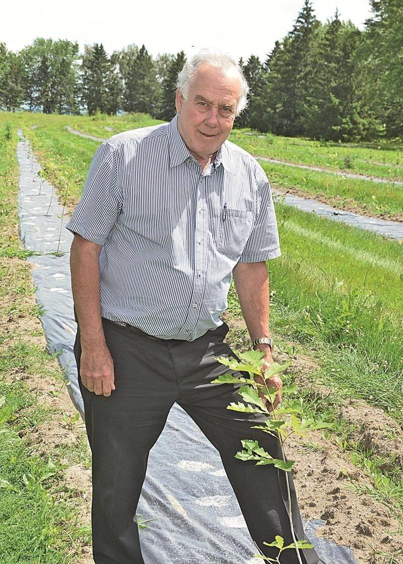 L'homme d'affaires Roger Letendre a investi dans la plantation de 600 arbres avant d'accueillir ses premiers résidents sur l'ancien terrain de golf La Providence.  Il compte aussi répéter l'expérience dans les années futures.  Photo François Larivière   Le Courrier ©