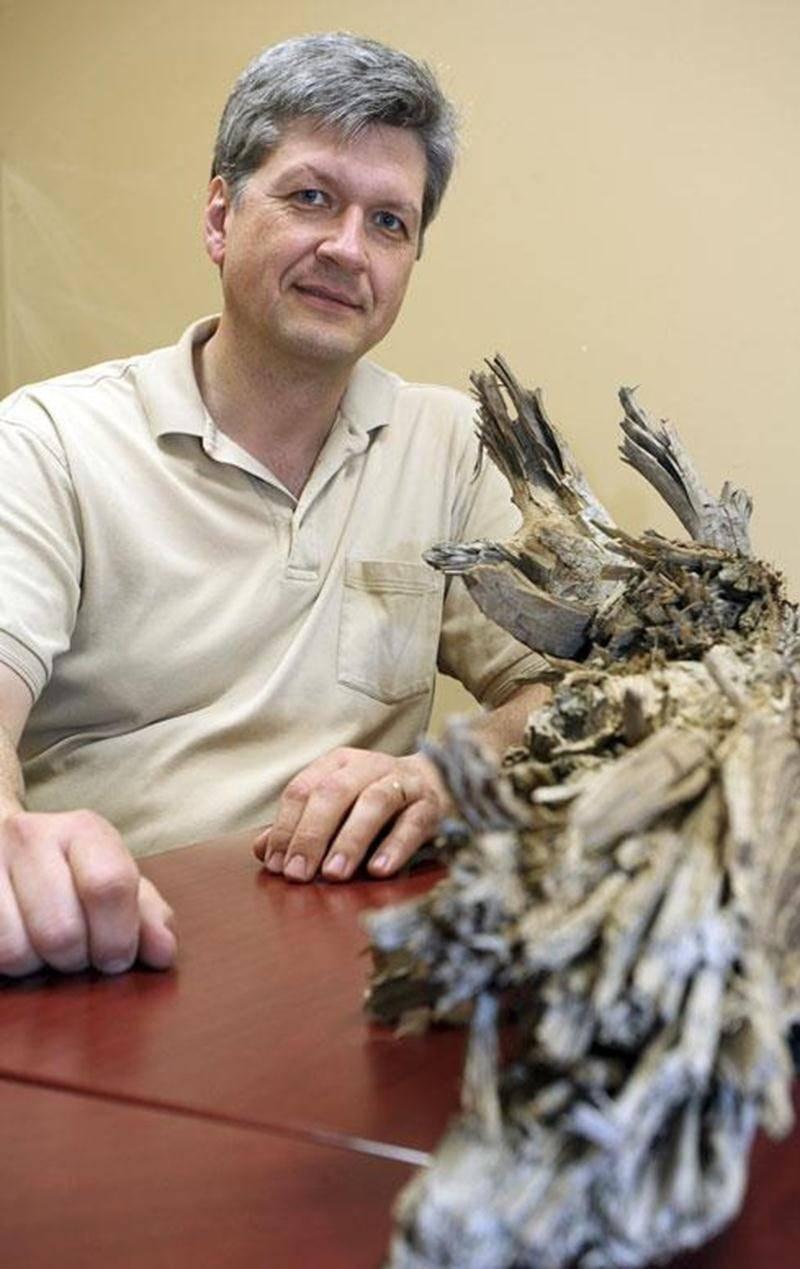 Ghislain Poisson, agronome au bureau du MAPAQ de Saint-Hyacinthe a découvert un tronc d'arbre datant de l'Égypte antique.