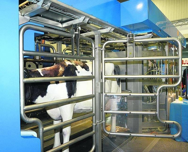 L'entreprise néerlandaise BouMatic Robotics propose une nouvelle approche de la traite robotisée. Le bras du robot s'approche de la vache entre les pattes de derrière et ainsi sécurise davantage l'animal durant la traite. Une caméra 3D haute définition permet de déterminer avec précision la position des trayons et de déposer les gobelets de traite. Photo François Larivière | Le Courrier ©