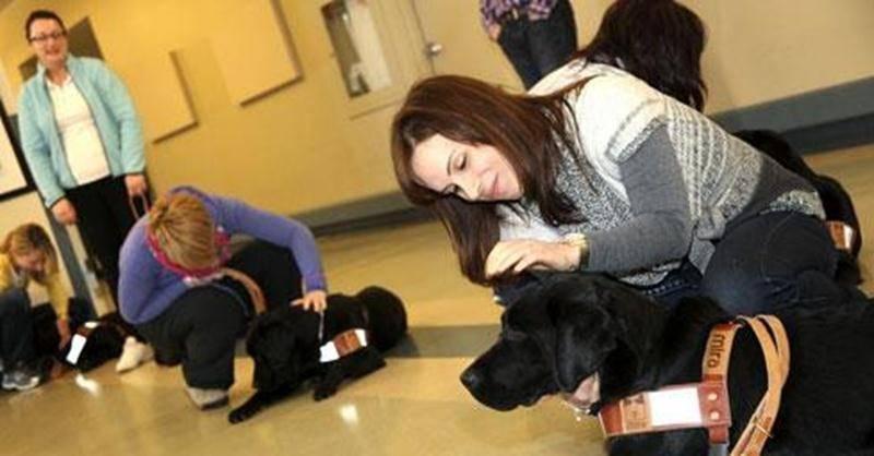 Des parents d'enfants TED ou TSA sont à l'entraînement avec le chien qui deviendra le meilleur compagnon de la famille.