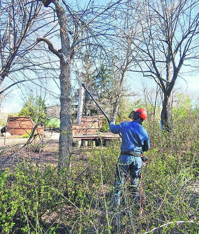 Le dépistage de l'agrile du frêne a été effectué à l'égard des 50 spécimens que l'on trouve à l'ITA, campus de Saint-Hyacinthe et au Jardin Daniel A. Séguin.
