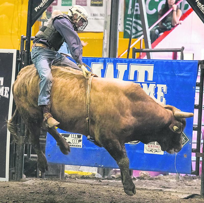 La monte de taureaux sauvages dans le cadre du rodéo a été un moment prisé par les spectateurs de l'aréna L.-P.-Gaucher.