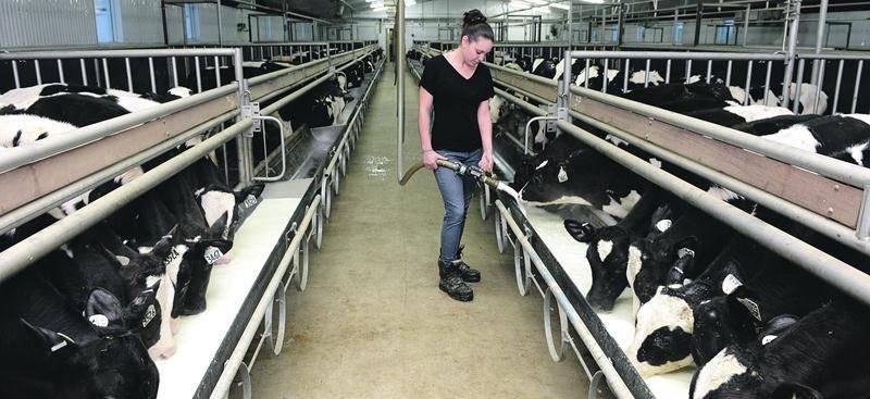 L'industrie du veau de lait au Québec devra se passer du programme d'Assurance stabilisation des revenus agricoles (ASRA) en 2016.  Photothèque | Le Courrier ©