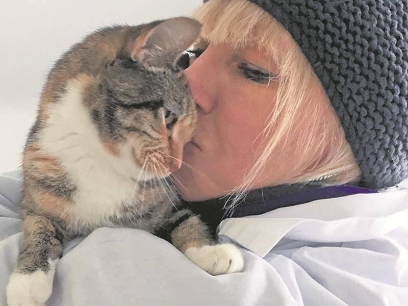 Chats en pleine santé et affectueux à la recherche d'une famille