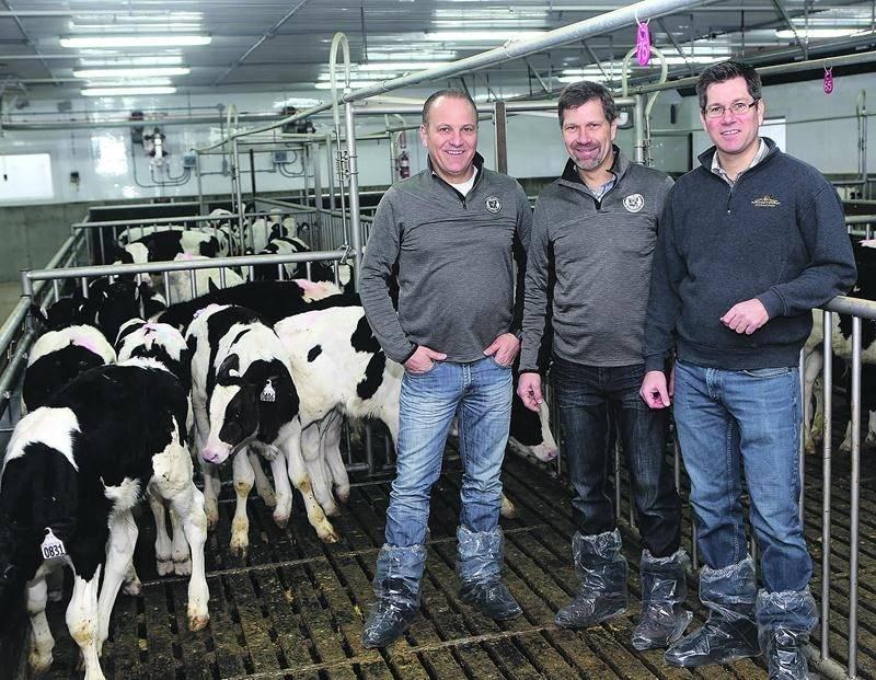 Sur la photo, dans l'ordre habituel, les frères Donald, Fabien et Alexandre Fontaine copropriétaires de Délimax, le plus important producteur et distributeur de veau de lait, de veau de grain et d'agneau en Amérique du Nord. Photo Robert Gosselin | Le Courrier ©