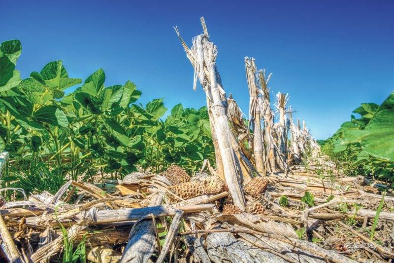 Sur cette entreprise agricole, on a opté pour le semis direct. Cette méthode de culture favorise entre autres le maintien des sols à proximité de la rivière Noire en limitant l'érosion et la formation de ravines et rigoles. Photo : Nathalie Roy | MRC ©