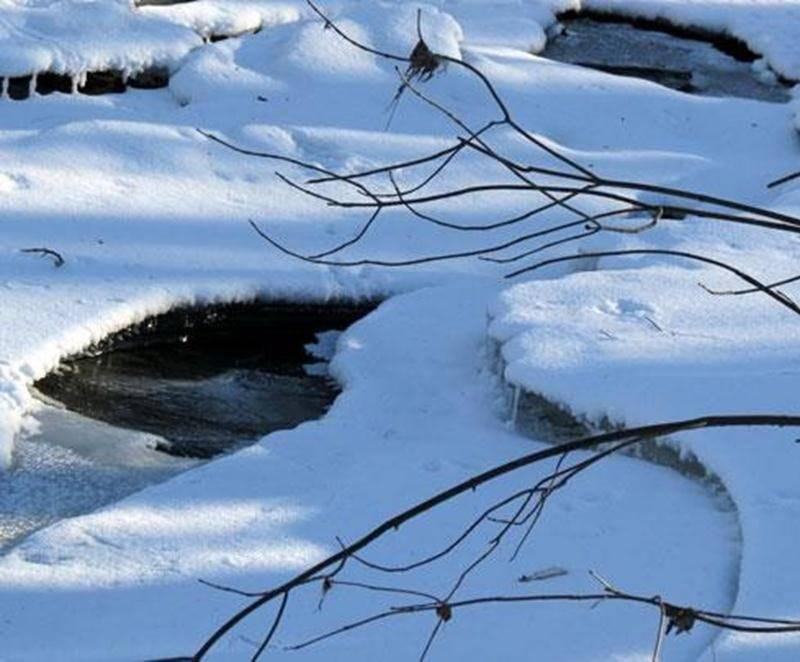 La vie l'hiver… Par temps froid, l'anthropomorphisme qui attribue des comportements humains aux animaux est une voie facile pour expliquer les agissements de certains animaux, mais qu'en est-il vraiment? Pourra-t-on déceler un peu de vie par une journée certainement froide de février? Nous apprendrons aussi à identifier certains arbres par l'observation de leurs bourgeons. Point de rencontre dès 9 h au stationnement de la rue Brouillette. Tarif : contribution volontaire et gratuité pour les memb