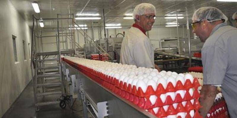Plus de 1,5 million d'oeufs sont transformés chaque jour à l'usine d'Upton.