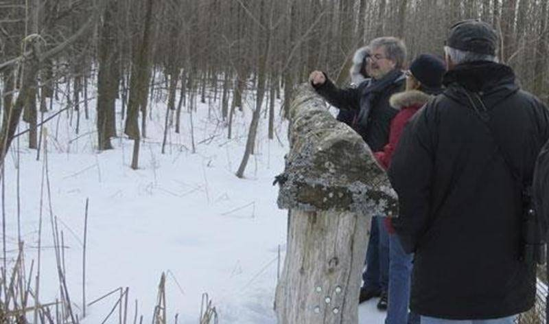 À la recherche des lichens. Fruticuleux, foliacés et crustacés… trois formes communes de lichens. Tous ces genres et bien d'autres s'observent au Boisé-des-Douze. Si nous savons les identifier, saurons-nous les trouver? Et si nous étions capables de trouver des espèces plus rares de cet univers captivant! Débutant ou expert, n'hésitez pas à vous joindre au groupe. C'est avec plaisir que nous apprenons les uns des autres. Point de rencontre: stationnement de la rue Brouillette dès 9h. Tarif: c