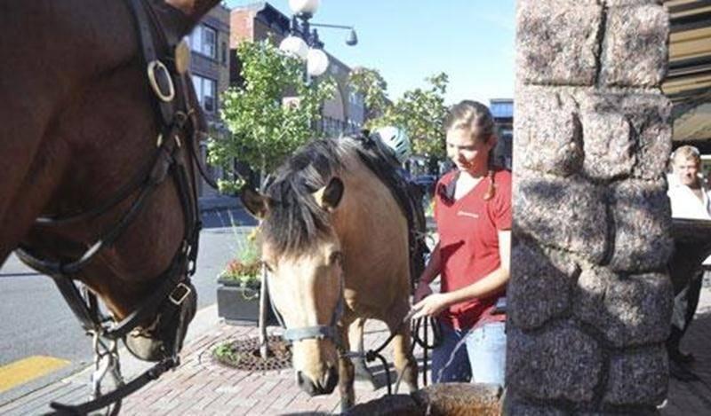 Avez-vous croisé des chevaux sur votre chemin à Saint-Hyacinthe le dimanche 4 août? Non, ils n'arrivaient pas de l'Expo. Six cavaliers avaient décidé de trotter depuis l'écurie l'Escapade, en passant par le chemin du Rapide Plat, pour se rendre ainsi jusqu'au centre-ville de Saint-Hyacinthe, à l'abreuvoir d'époque à l'avant du vieux marché. Après avoir entendu parler d'un cavalier interpellé par des policiers alors qu'il circulait dans les rues de Montréal, le Maskoutain André Martin a consulté