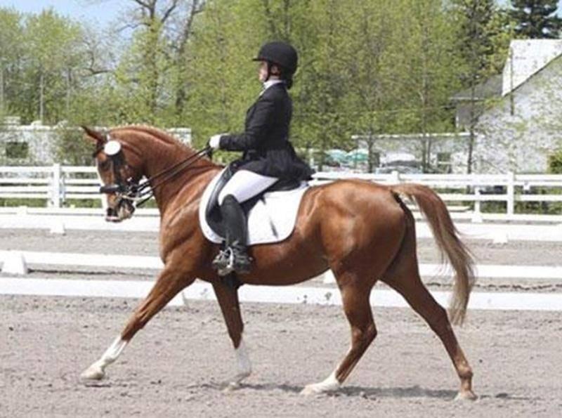 Mélissa et O'phélie tenteront de séduire le jury au Championnat nord-américain pour juniors et jeunes cavaliers.