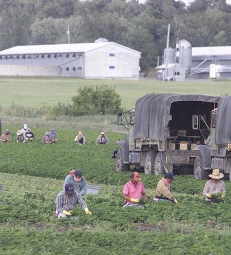 La réforme de l'assurance-emploi aura un impact sur l'embauche de travailleurs agricoles étrangers.