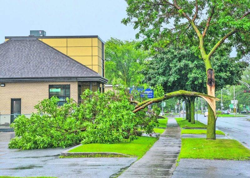 Plusieurs branches ont été sectionnées par la foudre mardi au cœur du violent orage qui a frappé la région. Photo François Larivière | Le Courrier ©
