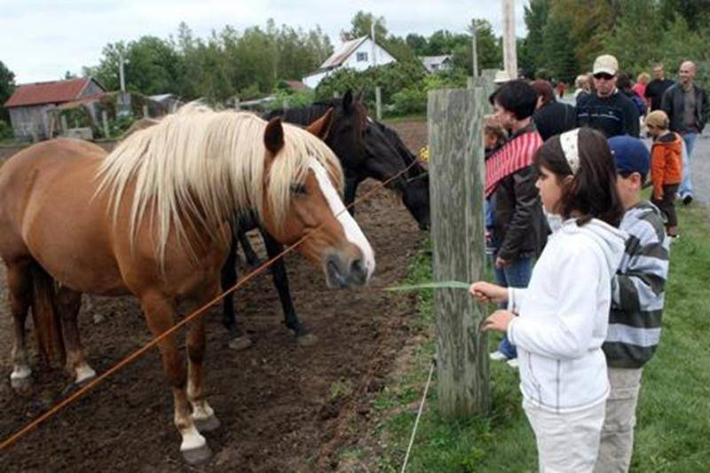 Ne manquez pas une occasion en or de visiter gratuitement, en couple ou en famille, l'une ou plusieurs des 16 fermes participant dans la région à la journée Portes ouvertes sur les fermes du Québec, le dimanche 11 septembre, de 10 h à 16 h.