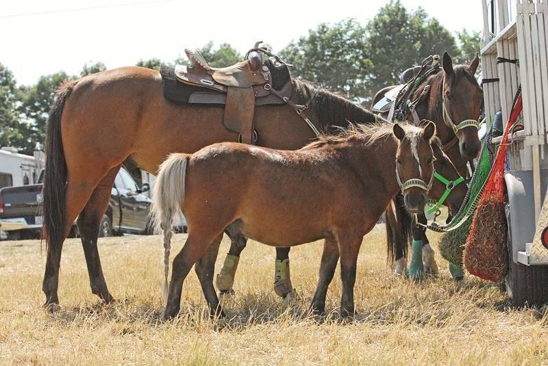 Plus de 250 cavaliers avaient participé à la première édition du RC Show l'an dernier.  Photo Courtoisie