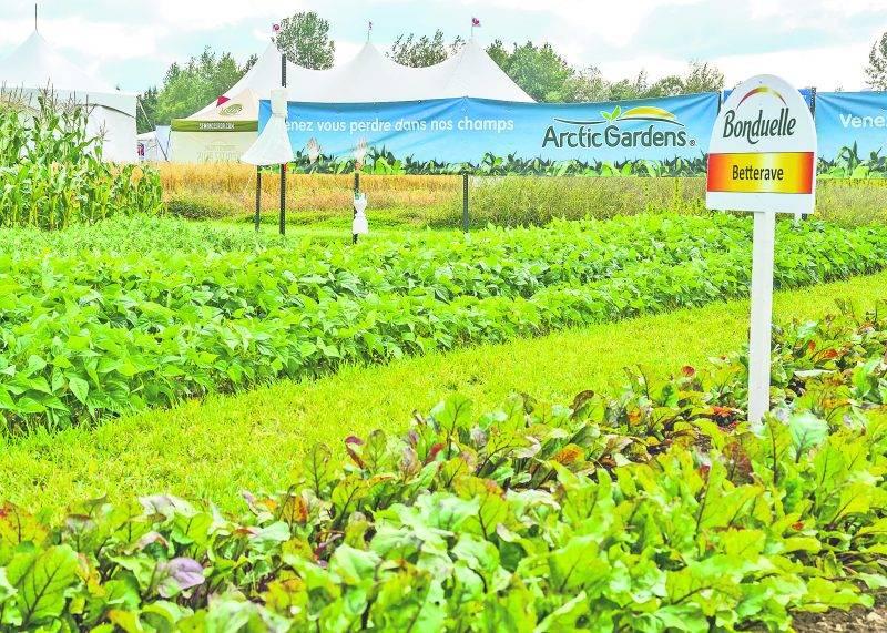 Une portion du site est réservée aux semenciers. Bonduelle Canada, une entreprise spécialisée dans la transformation de légumes, avait semé des betteraves, des haricots, des petits pois et du maïs sucré.
