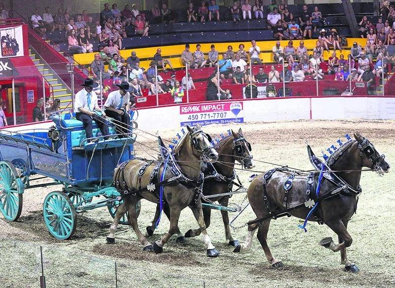 Le Concours provincial d'attelages demeure une tradition de l'Expo. Année après année, les spectateurs y découvrent les plus beaux chevaux du Québec.  Photo Robert Gosselin | Le Courrier ©