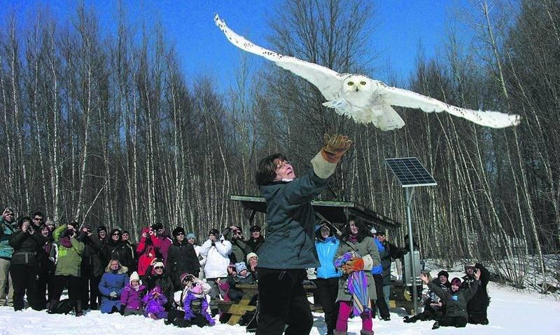 Pendant la relâche scolaire, plusieurs activités pour toute la famille animeront le site de Chouette à voir! à Saint-Jude. Parmi celles-ci, la remise en liberté d'un oiseau réhabilité.