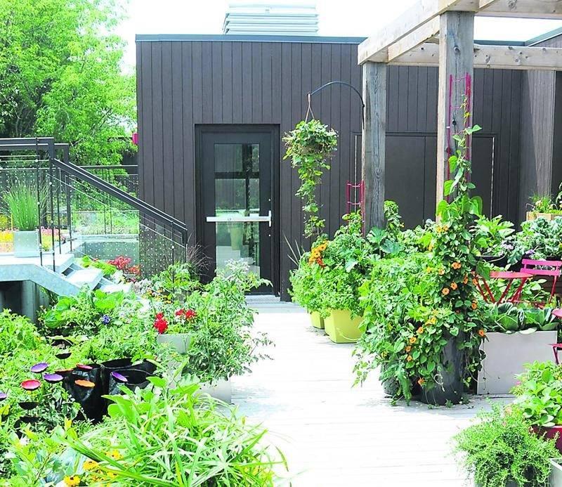 Le TechnoLAB d'agriculture urbaine se trouve sur le toit du Pavillon horticole écoresponsable.  Photo Claude Vallée