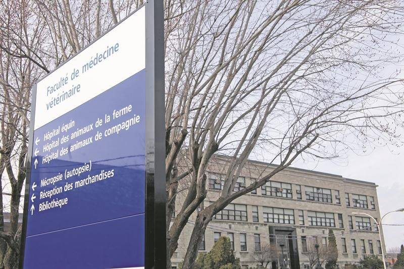 La session d'hiver reprend aujourd'hui même si le conflit perdure à la Faculté de médecine vétérinaire de Saint-Hyacinthe. Photothèque Le Courrier