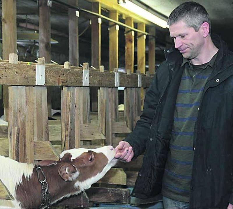 L'éleveur de veau de lait André Lussier dans son étable à Saint-Dominique. Photo François Larivière | Le Courrier ©