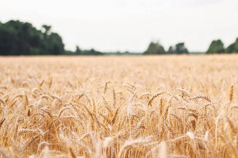 Crise dans la recherche en agriculture au Québec (CÉROM)