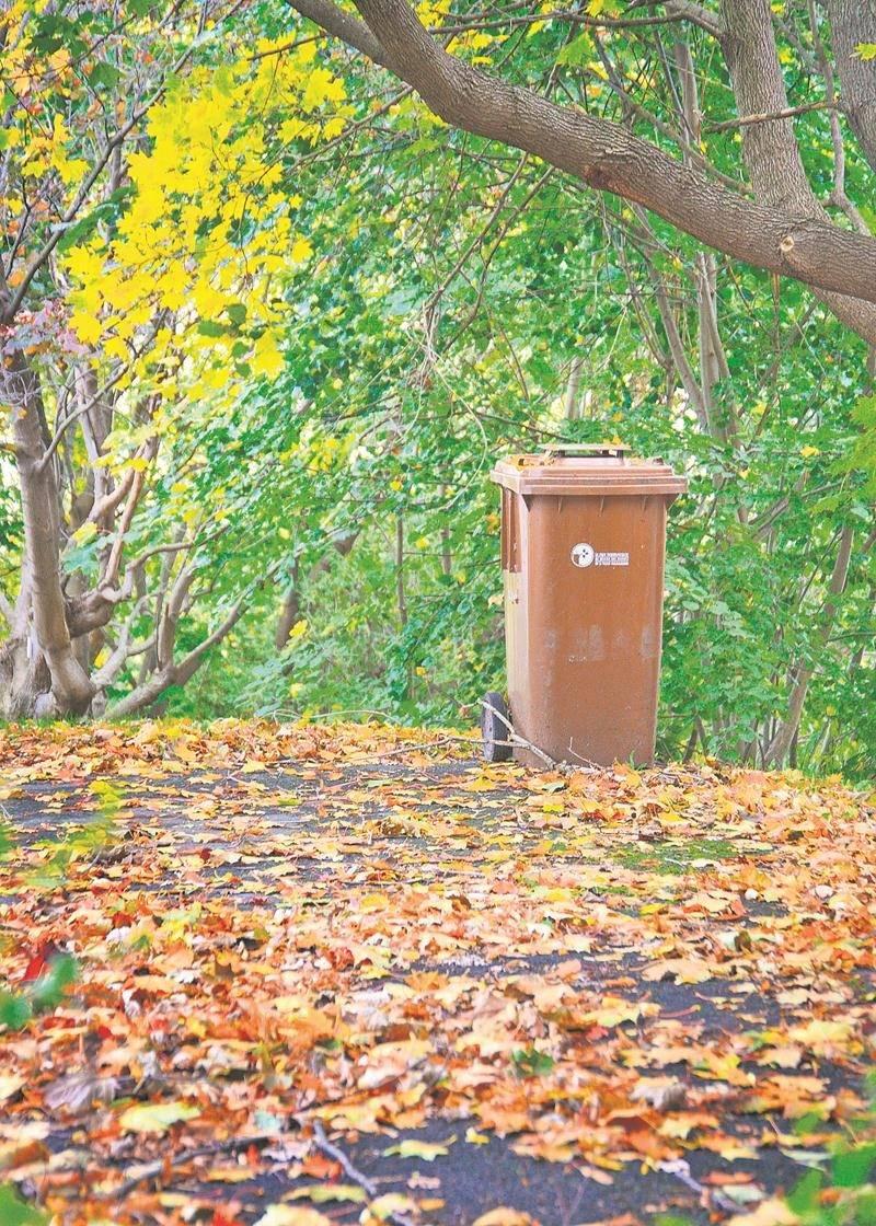 Les feuilles mortes sont sans valeur pour la biométhanisation, et les bacs bruns en contiennent  trop en automne.   Photo Robert Gosselin | Le Courrier ©