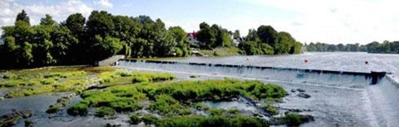 Une étude scientifique permettra peut-être de déterminer comment se comportent les anguilles lorsqu'elles aboutissent au pied du barrage Penman's, en route vers les embranchements de la rivière Yamaska qui coulent en amont.