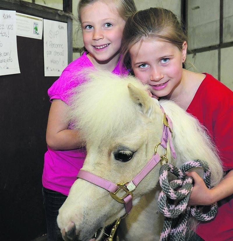 Les chevaux miniatures ont attiré l'attention de plusieurs jeunes au Salon du cheval.