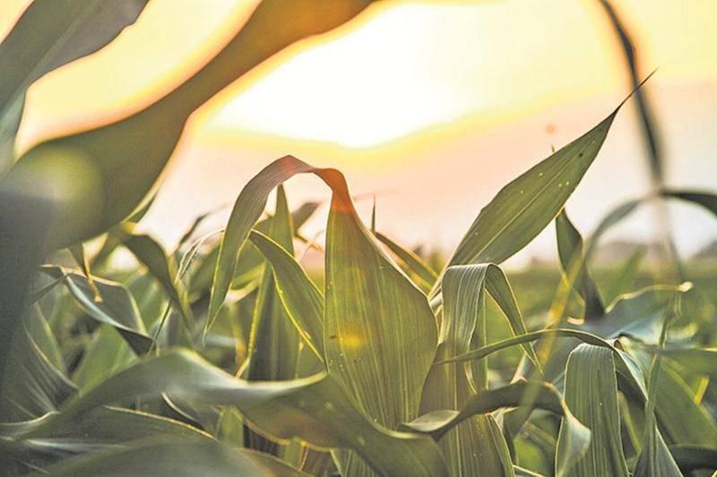 Les cinq grandes tendances à surveiller dans le secteur agricole en 2018