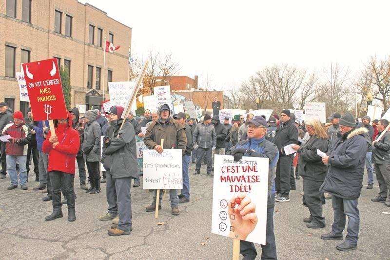 Dernièrement, plus de 400 producteurs agricoles ont manifesté devant le bureau de circonscription du ministre de l'Agriculture, Pierre Paradis à Cowansville.