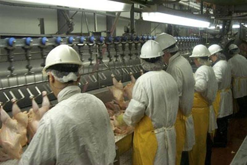 La totalité de la production de l'usine Olymel de Saint-Damase spécialisée dans l'abattage et la découpe de poulets est halal.