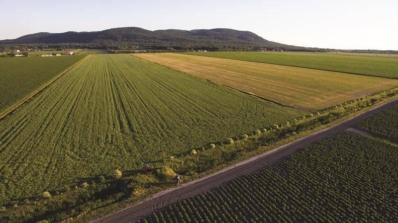 Ce projet de bande riveraine arbustive a permis de résoudre un problème récurrent d'érosion et d'espacer considérablement les entretiens du cours d'eau, des travaux très couteux et néfastes pour la biodiversité. Grâce au travail collectif de plusieurs agriculteurs voisins souhaitant apporter une solution à long terme, ce projet est un succès. Photo: Sébastien Deraspe | MRC ©