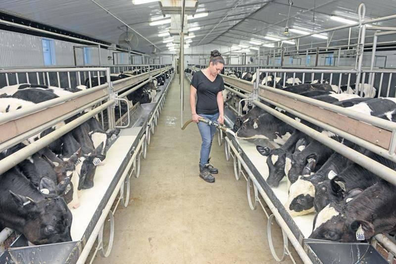 Depuis le 1er janvier 2016, l'industrie du veau de lait au Québec n'est plus assujettie au programme d'Assurance stabilisation des revenus agricoles (ASRA). Photothèque | Le Courrier ©