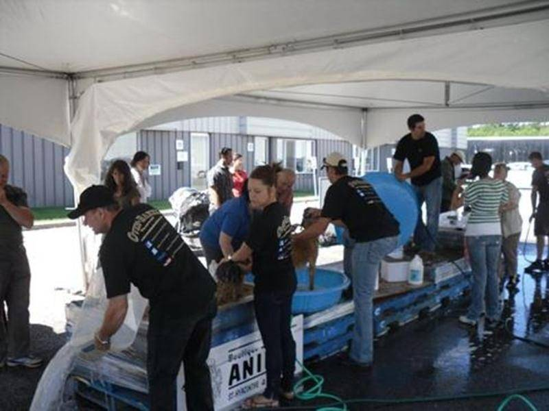 Le lave-o-chien de l'an dernier a permis d'amasser 3 500$ pour la Fondation Charles-Bruneau. Cette année, l'activité aura lieu le 6 août dans le stationnement de l'entreprise Bio-Biscuit.