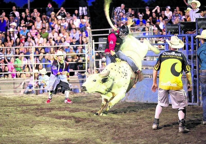 Au rang des spectacles équestres, le rodéo extrême met en scène les cowboys et les cowgirls les plus talentueux de la province. Photo Robert Gosselin | Le Courrier ©