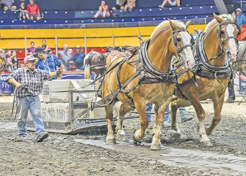 Les spectacles de chevaux sont une tradition à l'Expo. Pour cette 181e édition, des épreuves de tire de chevaux se tenaient à l'aréna L.P.-Gaucher.
