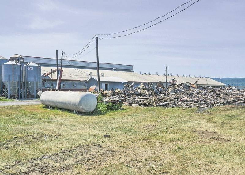 Il ne restait plus grand-chose de la porcherie au lendemain du violent incendie. De nombreuses carcasses se trouvaient encore dans les débris. Photo François Larivière | Le Courrier ©