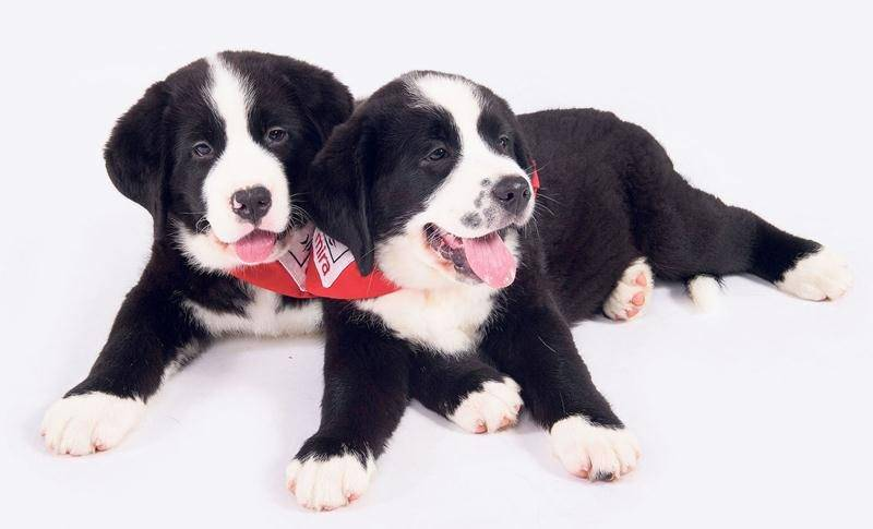 La formation d'un chien Mira coûte en moyenne 30 000 $. Photo courtoisie