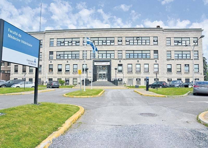 Le travail de la cinquantaine d'enseignants-cliniciens de la Faculté de médecine vétérinaire de Saint-Hyacinthe est maintenant régi par une convention collective.