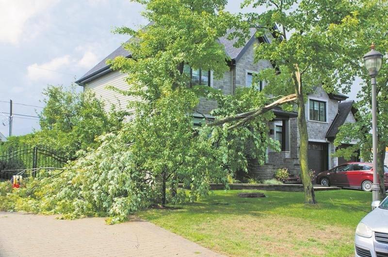 Quelques arbres se sont brisés du côté de Douville lundi après-midi, tout particulièrement dans le Havre des Dominicains. Photo Courtoisie