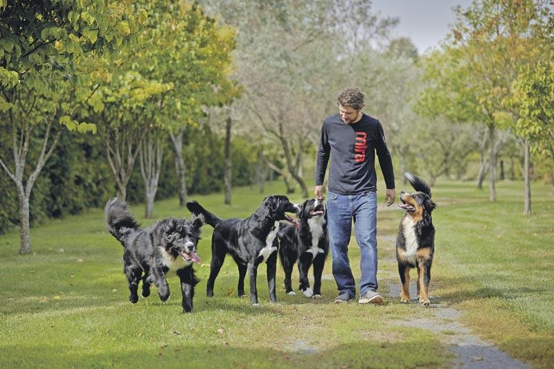 CANADA, MONTREAL, 05 Octobre 2017, La fondation MIRA poursuit l objectif d accroître l autonomie des personnes handicapees et de favoriser leur integration sociale en leur fournissant gratuitement des chiens developpes et entraines pour repondre a leurs besoins en adaptation et en readaptation.. Photo : Thierry du Bois