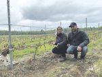 Pas de production de vin au Domaine du Cap cette année